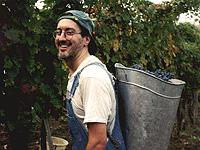Dan & the grapes